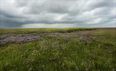 Storm clouds at Donna Nook 2 (Jillandcamera) Tags: donnanook lincs