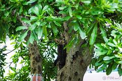 Today's Cat@2016-08-05 (masatsu) Tags: cat catspotting thebiggestgroupwithonlycats pentax mx1
