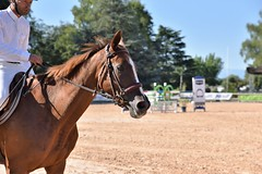 DSC_0849 (2) (ploufjf_64) Tags: paus show jumping chevaux pau 2016