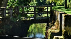 ~~Petit pont au dessus de la Doue ~~ (Jolisa) Tags: pont bridge eau ru ruisseau ladoue franchecomt doubs glay 25 reflets aot2016
