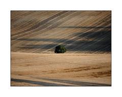 Combien de temps encore ... (eric_47) Tags: arbre agriculture ruralit paysage vie mort tree terre land landscape life death countryside campagne france lotetgaronne aquitaine