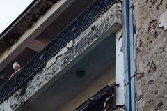 Sarajevo-42 (kidneydude) Tags: sarajevo bosniaherzegovina minefield library srebrenica roses franz ferdinand war bullet shotgun un united nations mines children tram warning trenches bobsled luge trees bunker birds graffiti flags half mast holes evening