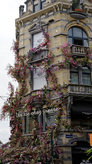 2016-07-17_17-26-37_ILCE-6300_9867_DxO (miguel.discart) Tags: 2016 54mm batiment belgium bru brussels bruxelles building bxl bxlove createdbydxo dxo e18200mmf3563oss editedphoto fleurs flowers focallength54mm focallengthin35mmformat54mm gratteciel ilce6300 iso100 skyscraper sony sonyilce6300 sonyilce6300e18200mmf3563oss