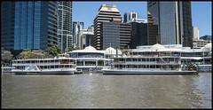 Brisbane Kookaburra Queens 1 and 2= (Sheba_Also Millon + Views) Tags: brisbane kookaburra queens 1 2