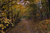 Walking path in fall (Majorimi) Tags: autumn coming fall tree sky leaf forest road canon eos 70d digital color colorful nice hungary scenic hdr yellow green brown
