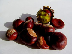 Conkers (amy's antics) Tags: conkers fruit horsechestnut shell brown chestnut