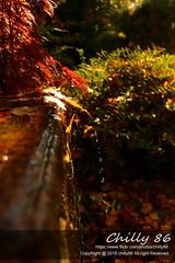 Setagayapark (Chilly House) Tags: herbst bltter setagayapark park asia wien wasser water tropfen wassertropfen brunnen