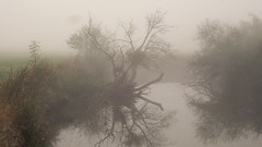 MISTY MORNING ON THE RIVER 20161016_084533 (hans 1960) Tags: mist misty nebel trist natur nature landschaft landscape bume trees river wasser water fluss blies outdoor reflexion spiegelung wiese gras oktober germany mirrow
