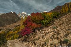 Karimabad (bilalqasim) Tags: autumn pakistan colors landscape nikon hunza karimabad ladyfinger d3200 gilgitbaltistan hunzavalleypakistan