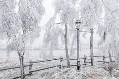 Frozen christmas lantern (R.Classen - Photography) Tags: christmas schnee winter light snow cold tree ice fence weihnachten lampe licht frost hoarfrost lantern rime zaun laterne kalt eis baum raureif wetter