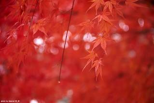Seoul Foliage