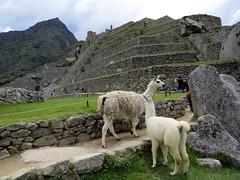 Machu Picchu-190