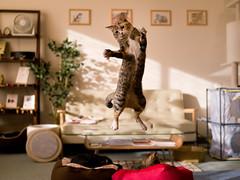 Hiyori (rampx) Tags: cat jump pentax action kittens neko   miaw hiyori 645z