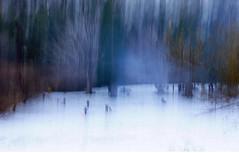 edwinloyolaNewYorkPortfolioReviewWinter03 (Edwin Loyola) Tags: autumn winter summer abstract fall nature seasons fineart fourseasons icm esl intentionalcameramovement edwinsloyola edwinloyola edwinloyolaphotography eslphotography