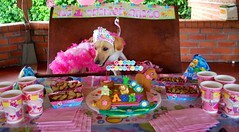 Miren toda la comida... guuuaaauuuu (Dogs Resort Pereira) Tags: fiesta perros mascotas guardera manada fiestadecumpleaos fotosdeperros dogsresort guarderaparaperros tortaparaperros guarderaparaperrosenpereira hotelparaperrosenpereira guarderacampestreparaperrosenpereira hotelcampestreparaperrosenpereira dogsresortpereira hotelyguarderacampestreparaperrosenpereira fiestadecumpleaosparaperros fotoscuriosasdeperros fotodenuestrosperros fotosdefiestadeperros