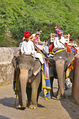 ELEFANTES SUBIDA (titoalfredo) Tags: india amber asia templos jaipur rajasthan montañas palacio salones colinas elefantes rajputs asiamenor pabellones fuerteamber adornadas titoalfredo