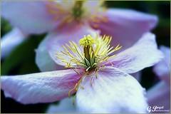 PETALES ET COULEURS (Gilles Poyet photographies) Tags: fleurs soe auvergne puydedme autofocus royat aplusphoto parcbargoin artofimages rememberthatmomentlevel1