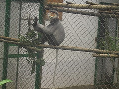 Endangered Primate Rescue Center Cuc Phuong