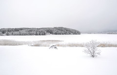 All control is in the hands of those who know (Kalense Kid) Tags: trees winter lake snow ice forest landscape sweden matfors vsternorrland vikarn skedvik
