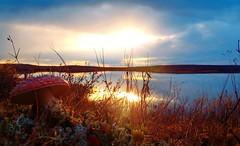 My trip to the tundra, September 2014., Nenets Autonomous Okrug (alexeykaralidze) Tags: trip plant landscape away september far tundra 2014