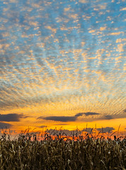 Harvest Sunset (Kenneth Keifer) Tags: blue autumn sunset red sky orange usa brown sun color fall silhouette yellow sepia clouds rural america landscape evening countryside amazing corn cornfield midwest colorful sundown farm vibrant horizon farming grain cereal harvest vivid indiana glorious stunning cornstalks crops agriculture setting maize brilliant silhouetted stalks tassels