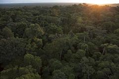 Sunset over the Amazon (ggallice) Tags: sunset peru amazon rainforest canopy madrededios cicra losamigosbiologicalstation