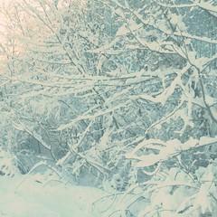 (K e v i n) Tags: trees snow nature outdoors branches huntington wv westvirginia hipstamatic adler9009lens oggl gotlandfilm