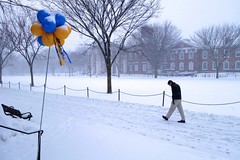 Snow, Balloons & Walker (The Flying Inn) Tags: blue trees snow storm man green weather yellow balloons campus walking gold university north snowing delaware newark ud academics universityofdelaware udel