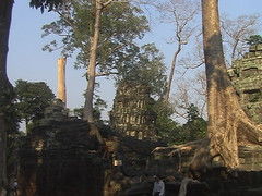 Forest Reclaiming Preah Khan