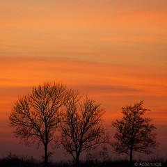 Trees on fire! (Jambo53 (catching up)) Tags: trees sunset orange holland netherlands silhouette zonsondergang bomen nederland oranje zuidholland southholland nikkor70300 robertkok nikond800 jambo53 langeraarseplassen