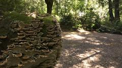 Louisa River Campsite