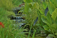 (Linda Petrich) Tags: summer plants water outdoors waterfall soft stones grasses backround