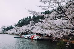R0018276 (usagi0915) Tags:    japanricoh grd travel          japan ricoh travel