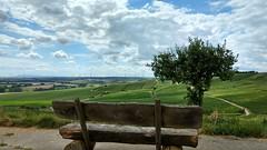 In der Ferne der Donnersberg (Frank Hamm) Tags: wandern rheinhessen weinberge hahnheim selzen