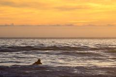 Liquid Gold (Warbey) Tags: atlantic ocean sea england uk kernow cornwall surfer surfing surf sunrise sun sunset