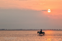 52 Week Challenge...30/52 Minimalism (Lauriethomson) Tags: beach sunrise silhouette horse camargue july 2016 gallant2016