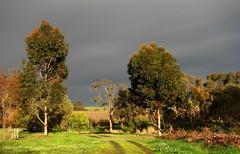 Black clouds 20160724_2ec2 (Bush Philosopher - Dave Clarke) Tags: australia southaustralia midnorth clare elysium clouds sunshine weather eucalypt