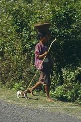 Lombok, Sassak Village, walking with the puppy (blauepics) Tags: indonesien indonesia indonesian indonesische lombok island insel sassak village dorf rural lndlich frau woman dog puppy hund welpe walking laufen tier animal