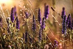 Hoseg.. (tferi666) Tags: travel ngc beautyful nice nature a6300 sony e50f18oss hungary magyar planet zempln tokaj srospatak sonyflickraward flickr award gold
