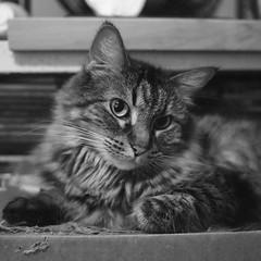 P7302906sp (colette_noir) Tags: kitty monochrome silkypix olympus epl2 mzuikodigital17mmf18