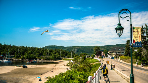 Seagull flying over Tadoussac