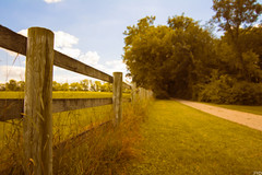 Fencing (patkelley3) Tags: