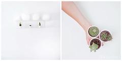 Be green (Jeanne {Baluche}) Tags: baluche diptych white