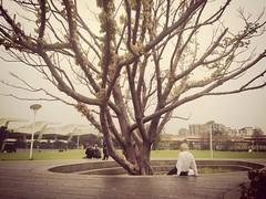 老人と木 #写真 #台北 #Taipeistreetdiary #Taipei #臺北台北街頭日記 #台湾 #youth #photo #老人 #余裕 #風が強く #傲笑年 #花博 #leisure #iphone #windy #Taiwan #life #elder #tree #shot #March #photography #youth (Cheng.WL) Tags: life tree youth photography march photo shot taiwan windy elder leisure taipei 台北 老人 台湾 iphone 写真 花博 余裕 風が強く 傲笑年 taipeistreetdiary 台北花博公園taipeiexpopark 臺北台北街頭日記