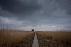 Kiekkaste (Jos Mecklenfeld) Tags: netherlands landscape sony nederland birdhouse groningen landschaft ems olanda landschap niederlande dollard eems nex vogelhaus 3n vogelkijkhut nieuwestatenzijl kiekkaste epz1650mmf3556oss sonynex3n