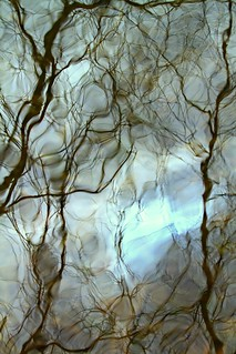 Tree reflections on Pompton River