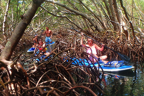 4-22-15-Norman-and-Family-lido-mangrove-tunnels 17