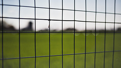 Isolation (○gus○) Tags: bokeh net rete blur duepalledottoreduepalle green il50ino ʂ xpl