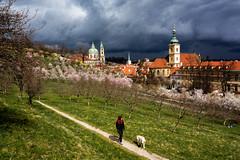 Praha, Czech Republic (O.Ortelpa) Tags: voyage city travel cloud cherry spring republic czech prague blossom postcard capital sightseeing praha chruch enjoy printemps