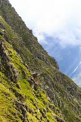Verdi Pendii (Roveclimb) Tags: shadow mountain alps verde green face suisse hiking ombra ridge mountaineering alpinismo svizzera alpi prato montagna slope klettern alpinism splugen spluga pendio escursionismo suretta graubunden grigioni seehorn versante rothornli surettaluckli